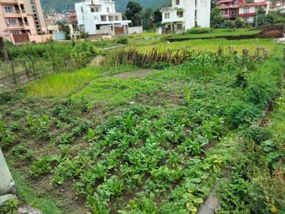 Land on sale at Chapali, Budhanilkantha